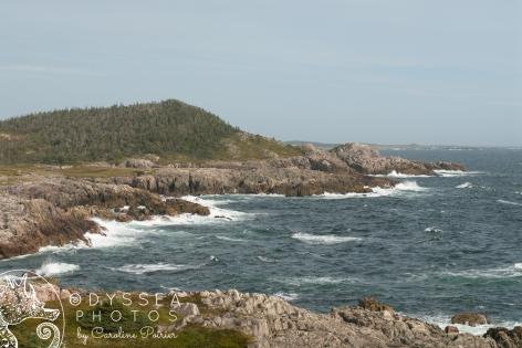 Rocky View 3