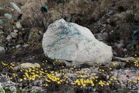 Flowers on the beack, and a Pink Rock