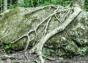 Uisge Bàn Falls Roots