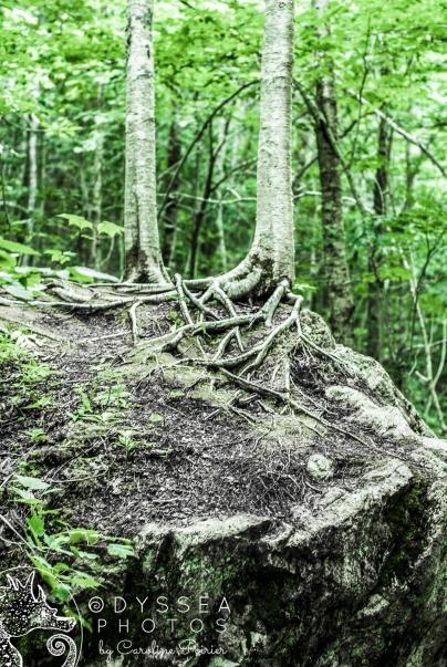 Uisge Bàn Falls Trees