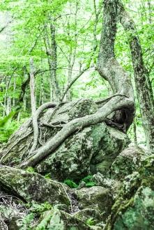 Uisge Bàn Falls Hugging Tree