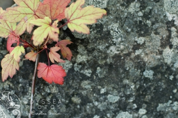 Leaves on Stone