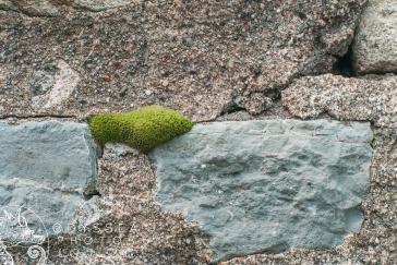 Moss and Bricks