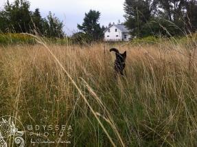 Kitten in the Grass